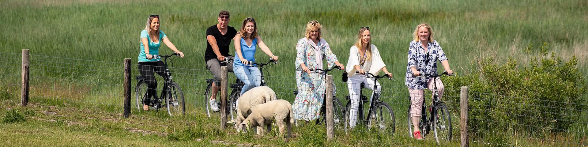 Eine Gruppe macht eine Radtour entlang am Deich und fährt dabei an zwei Schafen vorbei